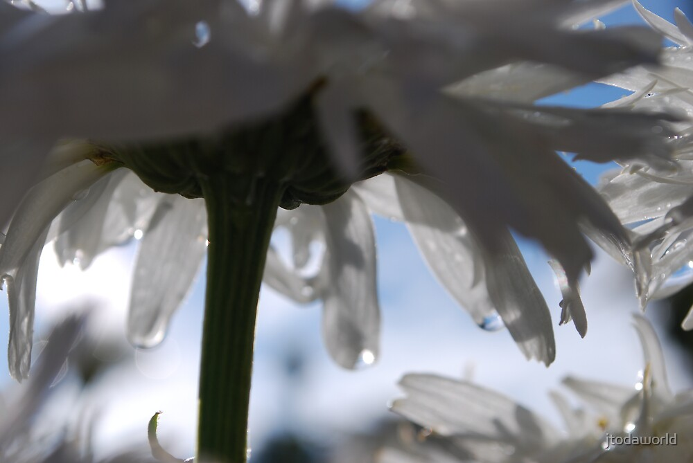 Dew Drops by jtodaworld
