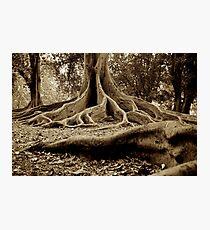 Hiding Hobbits Photographic Print