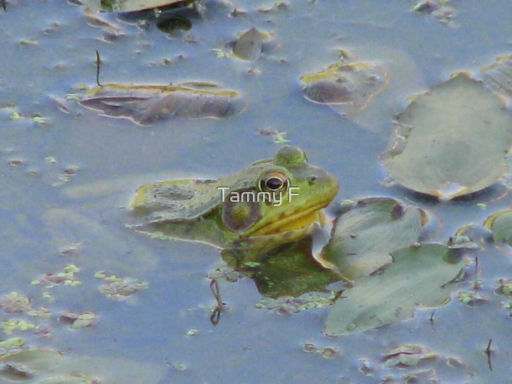 Pond Frog by Tammy F