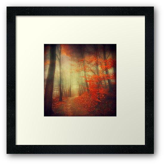 fire walk - forest in autumn colours by Dirk Wuestenhagen