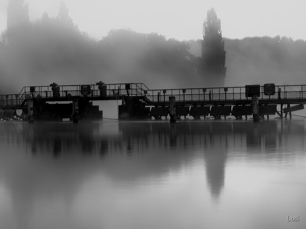 Weir by Losi