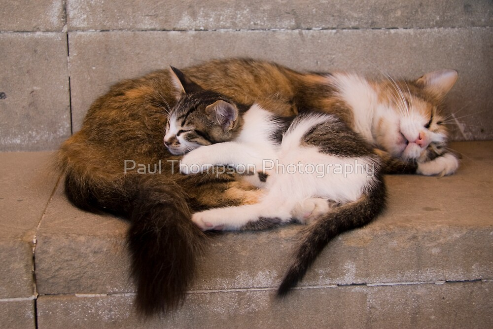 Wake Us Up When Dinner Is Ready by Paul Thompson Photography