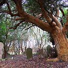 Ceme-tree by Penny Kittel