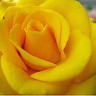 My yellow rose by Ana Belaj