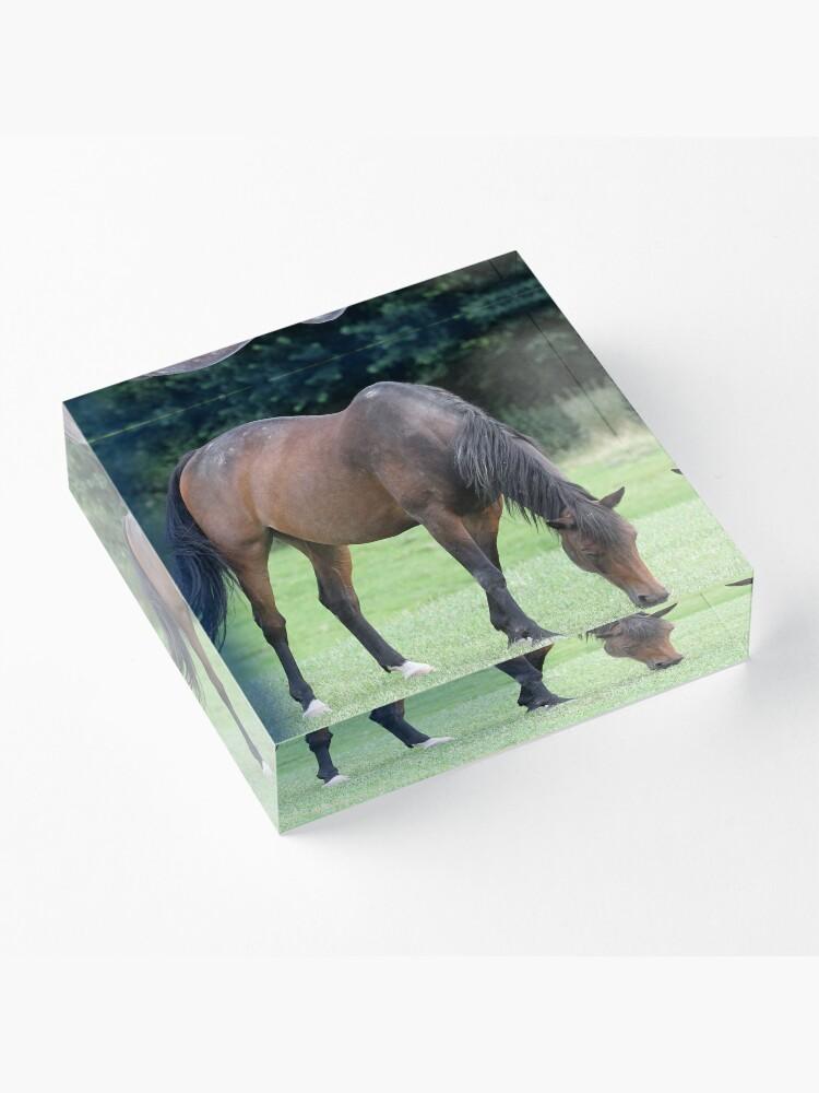 Alternative Ansicht von Braunes Pferd Acrylblock