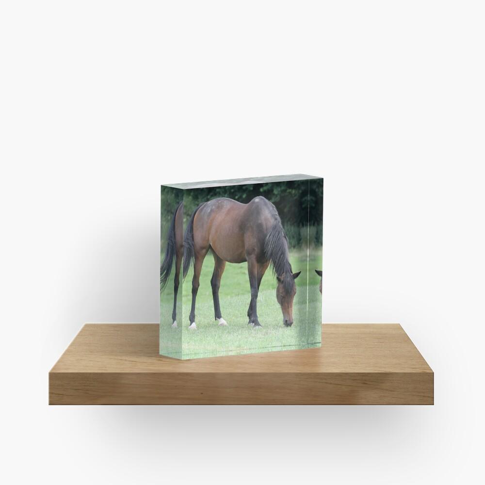 Braunes Pferd Acrylblock