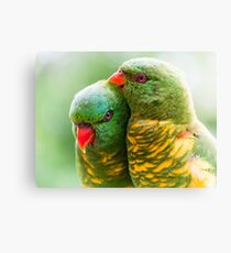 Scaly Affection Canvas Print
