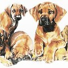 Rhodesian Ridgeback Puppies by BarbBarcikKeith