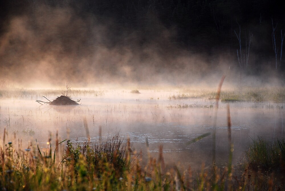 Misty pond by fallsguy