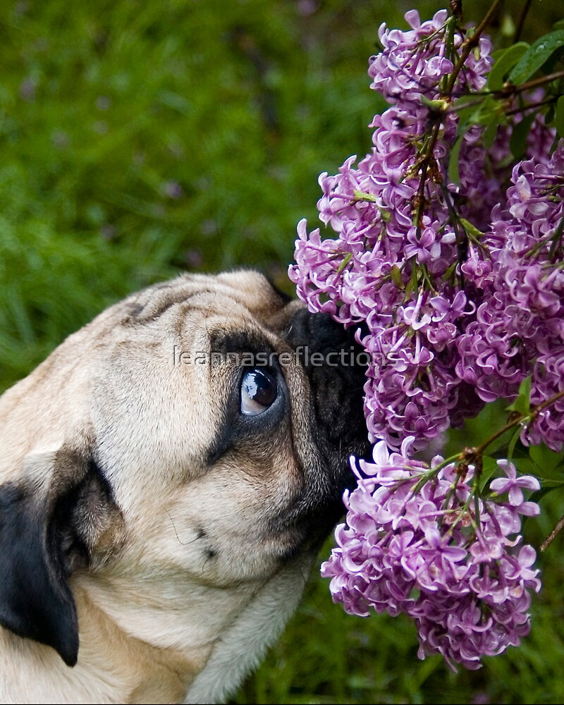 TAKE TIME TO SMELL THE FLOWERS by leannasreflections