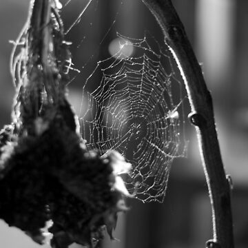 Dead Sunflower and Spider Web by DELAVALLE