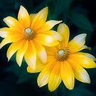 Sun Sisters  by Anita Pollak
