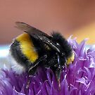 Busy Bee by trish725