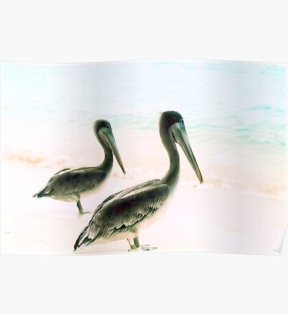 Birds in paradise Poster