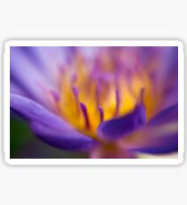 Selective focus of a purple water lily in a pond  Sticker