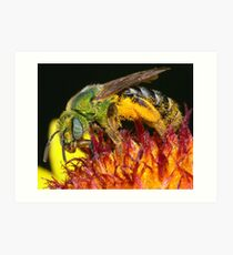Pollen Party Pooper ! Art Print