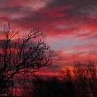 Heaven's Delight by trish725