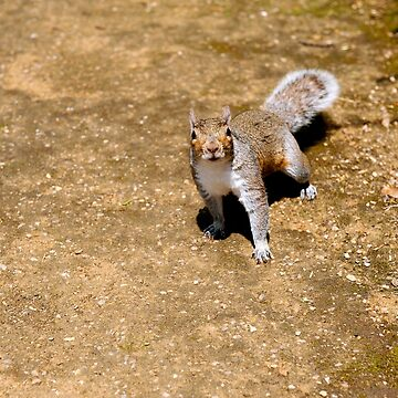 squirrel #48 by bronwenhyde