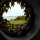 through the round window by SNAPPYDAVE