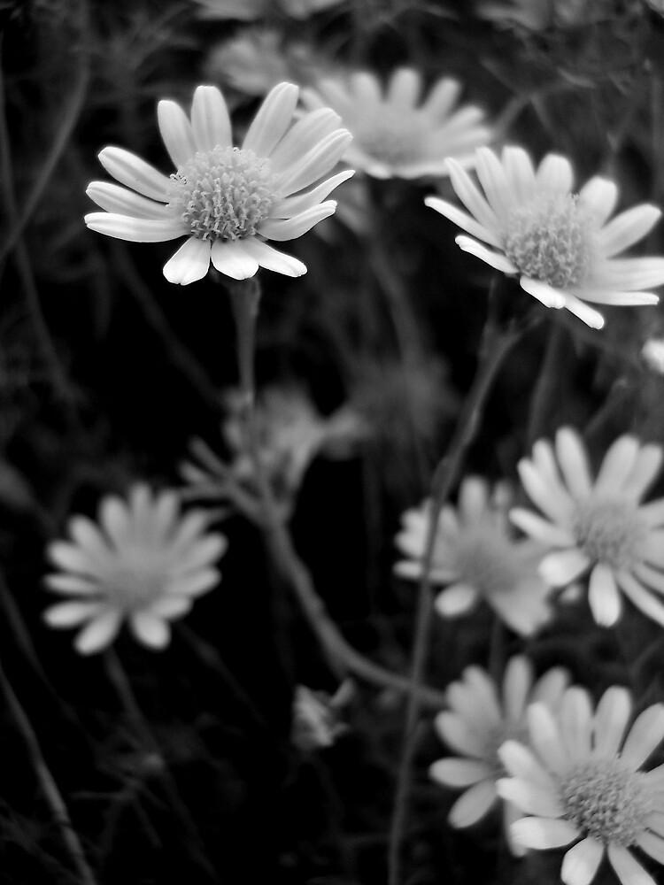 Twilight Flowers by Brad Bowman