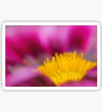 Selective focus of a red water lily in a pond  Sticker