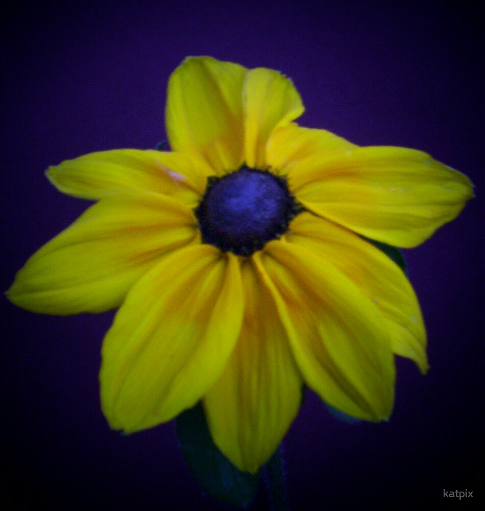 Yellow Daisy by katpix