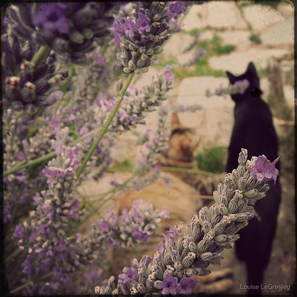 { lavender cats  } by Louise LeGresley