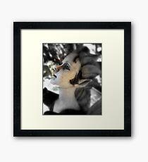 Sweet Pixie Framed Print