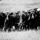 Out-Standing In Their Field by ehlphotography