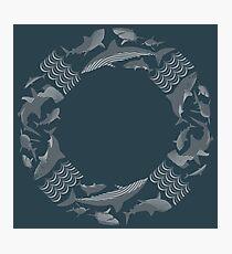 save the sharks lifesaver Photographic Print