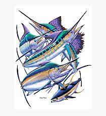 Pacific Billfish  Photographic Print