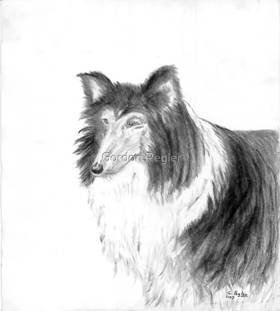 Collie - Charcoal by Gordon Pegler