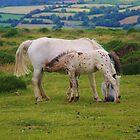 Dartmoor Ponies by lezvee