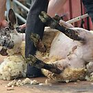 Sheep Shearer......Devon UK by lynn carter