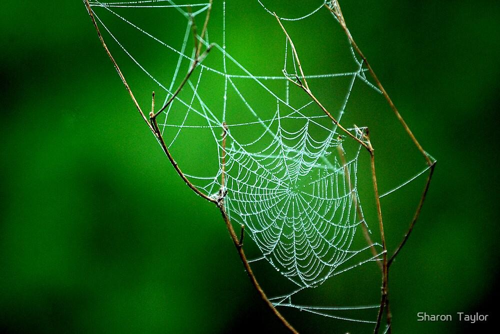tiny web  by Sharon  Taylor
