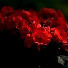 Scarlet by Lisa Hildwine