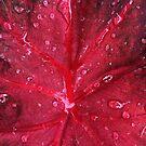 Red leaf by Nathalie Chaput