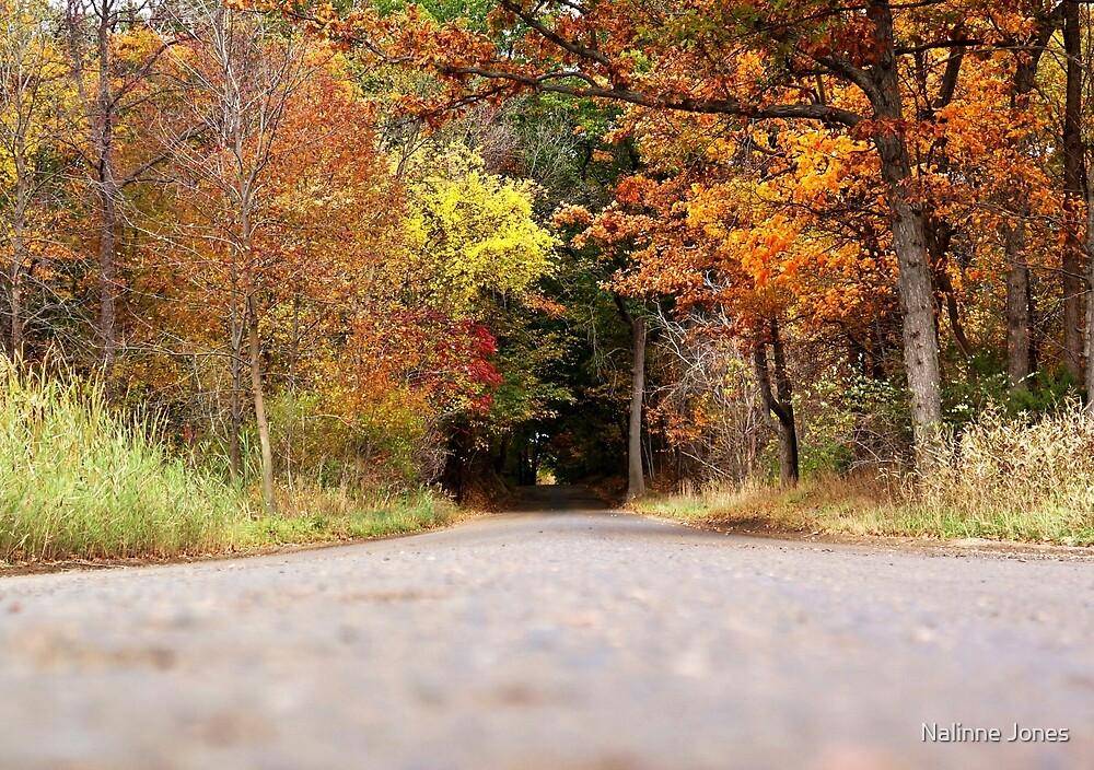 Autumn Tree Tunnel by Nalinne Jones