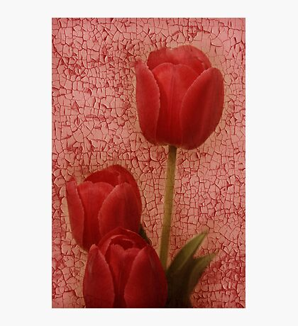 dipinto tulipano rosso Photographic Print