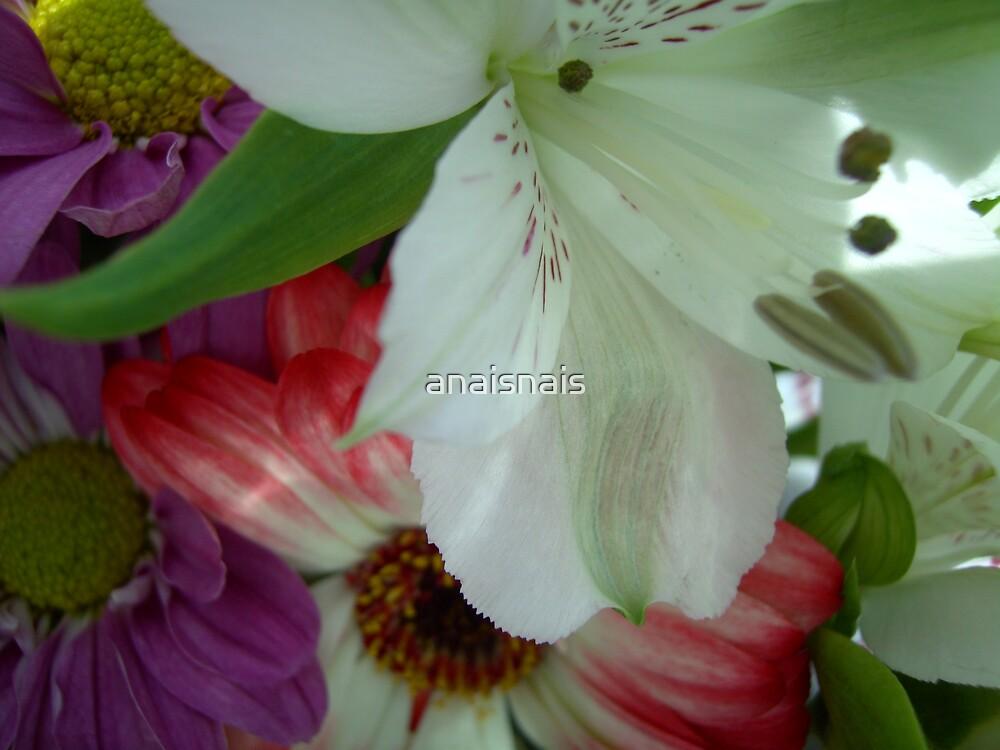 floral 11 by anaisnais