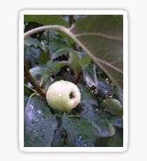 Apple Tree Sticker