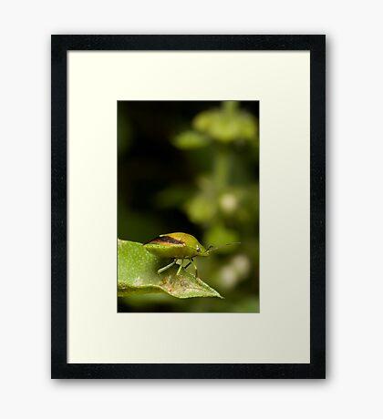Green Bug Framed Print