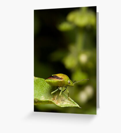 Green Bug Greeting Card