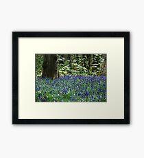 Bluebell Sea Framed Print