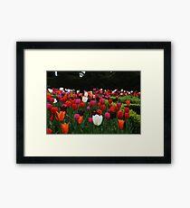 Nymans Tulips Framed Print