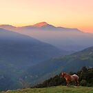 Sunrise Horse by sandgrouse