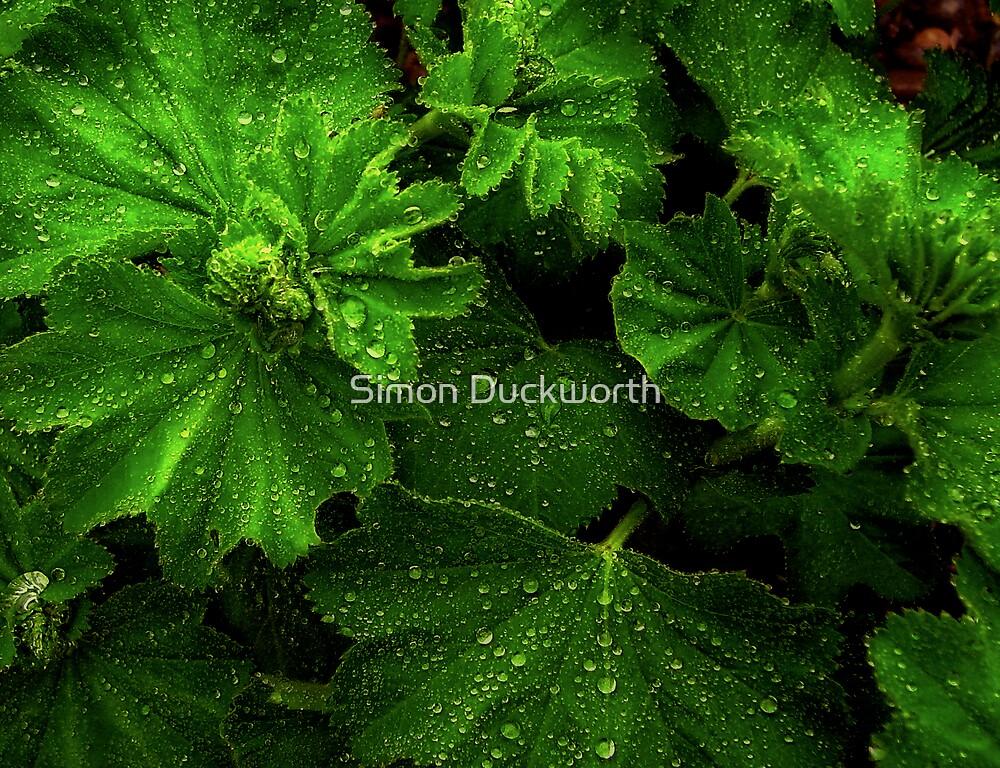 Wet Leaves by Simon Duckworth