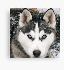 Game Thrones Wolf Stark 2 Canvas Print