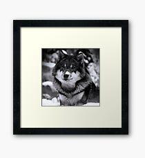 Game Thrones Wolf Stark 4 Framed Print