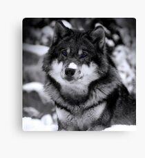 Game Thrones Wolf Stark 4 Canvas Print